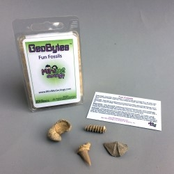 Fun Fossils