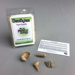 Fun Fossils