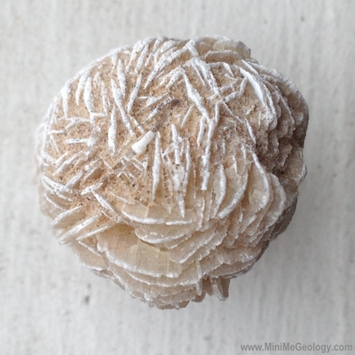 Gypsum Rose Mineral - Mini Me Geology