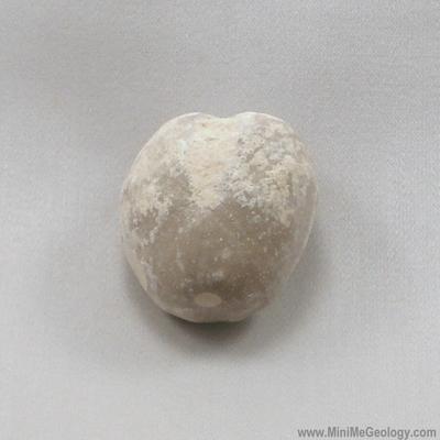 Echinoid Fossil - Heteraster Texanus – Mini Me Geology