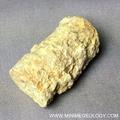 Crinoid Stem - Delocrinus