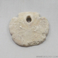 Sand Dollar - Encope Tamiamiensis Fossil